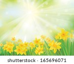 vector of daffodil flowers on... | Shutterstock .eps vector #165696071