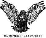 Hawk In Flight With Spread...