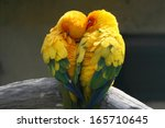 Pair Lovebirds