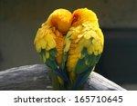 Stock photo pair lovebirds 165710645
