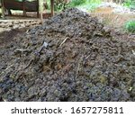 Mounds Of Cow Dung Manure