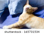 Stock photo happy cat in home 165731534