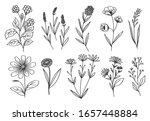 monochrome draw with flowers...   Shutterstock .eps vector #1657448884