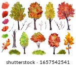 Large Set Of Autumn Trees On A...