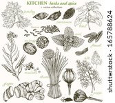 kitchen herbs and spice  vector ... | Shutterstock .eps vector #165788624