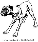 Dog Boxer Breed  Black And...