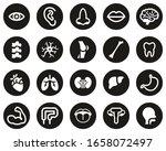 human anatomy or human body... | Shutterstock .eps vector #1658072497