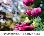 A Beautiful Flower Macro Of...