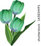 Illustration With Green Tulip...