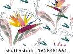 flowers of bird of paradise ... | Shutterstock .eps vector #1658481661