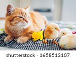 Easter Chicken Sleeping With...