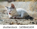 Homeless Kitten Abandoned On...