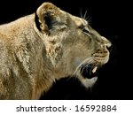 Lioness In Profile Against...