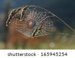 Spider Web With Dew Against Th...