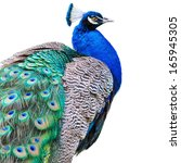 Beautiful Peacock Isolated On...