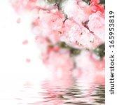 Stock photo garden roses 165953819