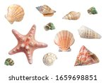 Bright different seashells and...