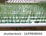 spring onion tree  organic... | Shutterstock . vector #1659848044