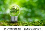 Small photo of The bulb is located on the inside with leaves forest and the trees are in the light. Concepts of environmental conservation and global warming plant growing inside lamp bulb over dry