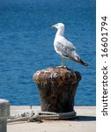 Seagull On Dock Pin