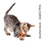 Stock photo little kitten with ball isolated on white 166017941