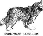 shaggy dog | Shutterstock .eps vector #166018685