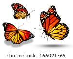 three color butterflies ...   Shutterstock . vector #166021769
