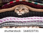 Stock photo angry cat is preparing for winter wrapped up in a pile of woolen clothes 166023731