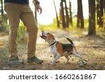 dog training. cute beagle dog...   Shutterstock . vector #1660261867