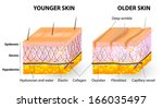 visual representation of skin... | Shutterstock . vector #166035497