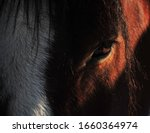 Close Up Of Clydesdale Horse ...