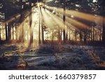 Sun Rays Shines Through The...