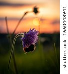A Bumblebee On A Flower At...