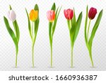 Colorful Tulips. Beautiful...