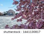Cherry Blossom Festival  Tidal...