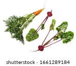 vegetables carrots and beets...   Shutterstock . vector #1661289184