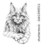Cat. Graphic  Artistic  Hand...