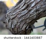 closeup view of vine trunk. old ... | Shutterstock . vector #1661603887