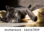 Stock photo small kitten on yellow pillow 166167839