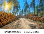 Log Stacks Along The Forest Road