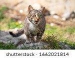 Beautiful Cross Eyed Cat...