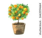 Orange Tree With Leaves In...
