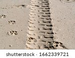 Offroad Tire Track On Sandy...