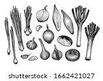 big set. onions  garlic  leeks... | Shutterstock .eps vector #1662421027