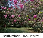 close up of bloomy magnolia... | Shutterstock . vector #1662496894
