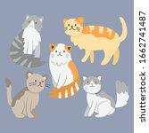 cat breeds cute pet animal set...   Shutterstock .eps vector #1662741487