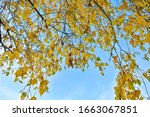 autumn background with yellow... | Shutterstock . vector #1663067851