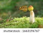 A Beautiful Little Butterfly...