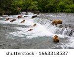 Bears Fishing Salmon At Brooks...