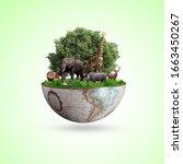 World Wildlife By Animal's On...